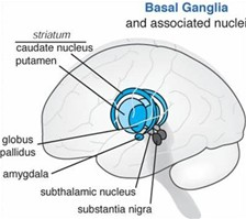 224x199-Brain 1